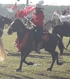 Cavalo manga larga Machado resgistrado