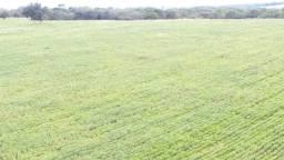 Fazenda 680 hectares - Campo Alegre de Goiás
