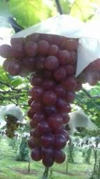 Título do anúncio: Uvas