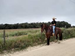 Vendo cavalo crioulo.