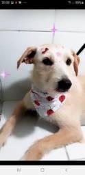 Cachorrinha muito meiga para adoção