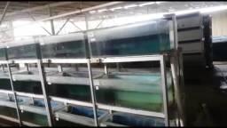 Aquarios ( diversos tamanhos )