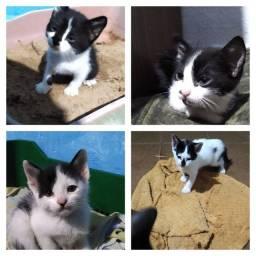 Filhotes de gato pra doação