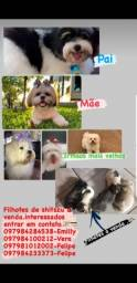 Cachorro de raça