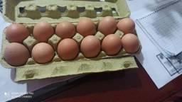 Vendo ovos galado de galinha rasa brama