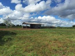 Fazenda no Pantanal MS 1826 hectares
