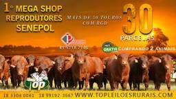 [2.44] 8 º Shop Troque o Touro, use Senepol (Condições em 30 parcelas) -