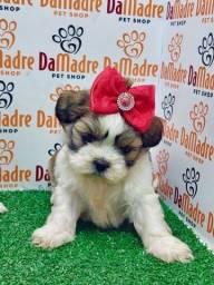 Filhotes de Lhasa é no Da Madre Pet Shop, parcelamos em 10X