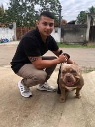 Adestramento,treinamento e passeio com cães