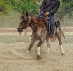 Doma racional para cavalo