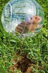 Bola de Passeio para Hamster - Combos Completos para Você