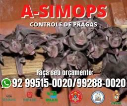 Morcegos Dedetização e controle de pragas