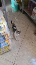 gatinhos para adocão