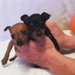Pinscher oferecemos suporte veterinário exclusivo !