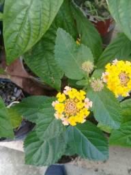 Verda de plantas ornamentais adubos