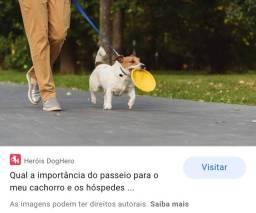 Boa viagem-pe Passeador de cães ( DOGWalker) MUITO PACIENTE