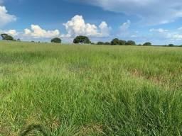 Fazenda com 355 hectares