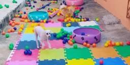 Hospedagem e creche para seu cão em BH/ Bairro Santa Efigênia