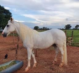 Cavalo barato e bom