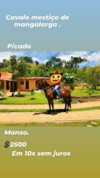 Cavalo caminhador