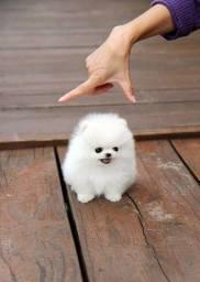 lulu  Cheio de carinho