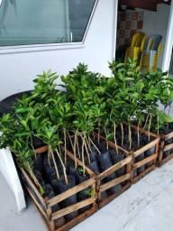 Plantas para todo interior