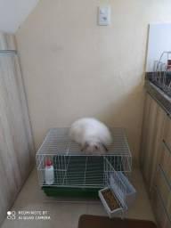Vendo coelho fuzzy lop