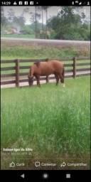 Está a venda cavalo de patrão.