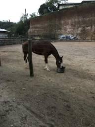 Vendo ou troco égua crioula