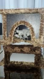 Arranhador de Gato - Lillicapet para todos
