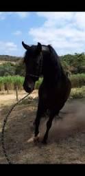 Procura se pasto para cavalo