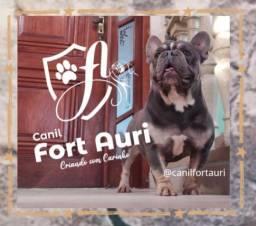Bulldog francês (cobertura) venda de filhotes.