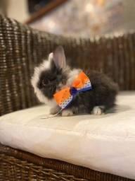 Mini coelhos em até 10x