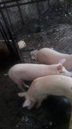 900 duas porcas