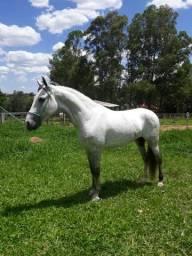 Cavalo MM a venda