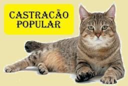 ( CASTRAÇÃO POPULAR )