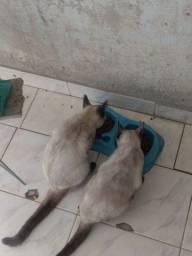 Doa-se duas gatas fêmeas