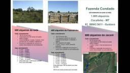 Fazenda para Arrendar em Cocalinho - MT