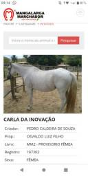 Vendo égua registrada MM