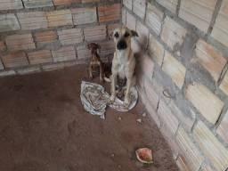 Cachorro  pra doações