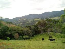 Fantástica Chácara com 4 Hectares, Bairro Brumado em Delfim Moreira/MG.