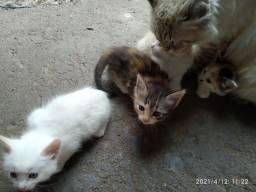 Doa se gatinhos