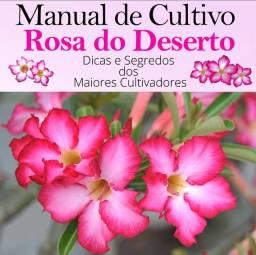 Rosas do Deserto (Aprenda a Cultivar)