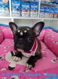 Filhote de Bulldog Francês vc e sua família vão se apaixonar!!!