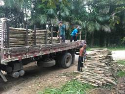 Sitio com plantação de pupunha e açai