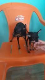 Vendo PET