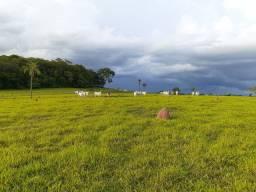 Fazenda 73 Alqueires | Anicuns | planta 40 | oportunidade única