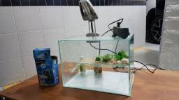 Aquario - Terrario para tartaruga