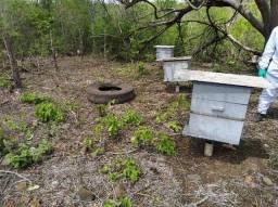 Enxame de abelha italiana.