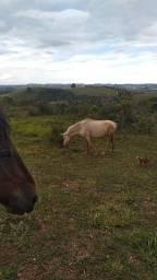 Vendo egua comun manga larga